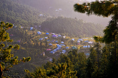 Dunga Gali (Shehzaad Maroof Khan) Tags: dungagali village light goldenhour mountain town sunlight sun houses homes shelter trees forest khyberpakhtunkhwa nathiagali pakistan beautifulpakistan