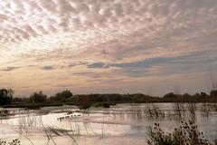 Nature awakens - Rupelmonde - Belgium (roland_tempels) Tags: nature rupelmonde belgium sky