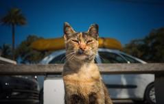Cool Cat... (hobbit68) Tags: fujifilm xt2 cat katze animals pets tiere tier haustiere espanol espagne espana andalusien andalucia car auto himmel sonne sommer holiday urlaub sky holzbank