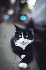 Street cat. (Pablin79) Tags: streetcity street outdoors daytime candid animal cat bokeh eyes feline posadas misiones argentina colors closeup portrait dof pet yellow