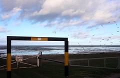 Seasalter (NovemberAlex) Tags: nature whitstable seasalter kent water seaside