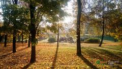 Осеннее утро на Звездном бульваре (SVOknaVDNH) Tags: фотография осень останкино деревья природа пейзаж город звездныйбульвар утро москва photo autumn ostankino trees nature city landscape zvezdniyboulevard moscow morning