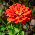 Pretty Orange Flower thumbnail