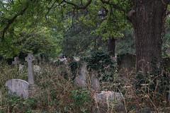 Brompton Cemetery (1) (pni) Tags: tree grass vegetation grave headstone tombstone gravestone brompton cemetery uk18 london uk england unitedkingdom pekkanikrus skrubu pni