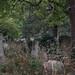 Brompton Cemetery (1)