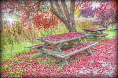 Fall at the lake (Garry's lens....) Tags: plum tree fall autumn beauty nature outdoors colorful pretty picmonkey