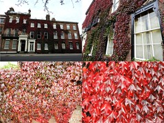 "HOUSE ""SEASON'S FLORA"" (garydavidworthington) Tags: smileonsaturday seasonsflora flower leaves leaf house wall window architecture city colour red green glass autumn change vivid macro building"