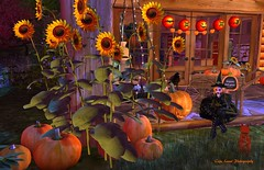 Pumpkins and Sunflowers (cejalaval) Tags: secondlife sl style slphotography slshopping firestorm halloween homedecor pumpkins sunflowers blog witch circa glenxi allurecouture redhead greeneyes fall autumn blogger blogging slblogger slblog wltb welovetoblog windlight cat lanterns cart crow