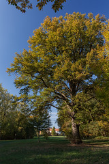 Burgsteinfurt_Schloss_Park-1258 (encyclopaedia) Tags: burgsteinfurt schloss brd germany westfalen westphalia castle lightroom raw herbst autumn