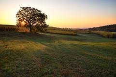 L'aube d'une belle journée automnale (Excalibur67) Tags: nikon d750 sigma art globalvision 24105f4dgoshsma paysage landscape nature levéedesoleil vignoble vigne ciel sky champs arbre tree lumière