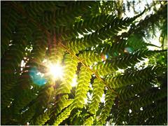Schönbrunn Palmenhaus (stefan.bauer) Tags: schönbrunn palmenhaus palmen palm gegenlicht lensflare flair nature indoor glashouse olympus omd em5markii leaf leafes sun