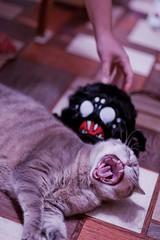 (mercer_spb) Tags: dontstarve кашалотта cat