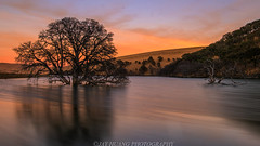 Trees in the Water (Jaykhuang) Tags: trees water eastbay sunset jayhuangphotography