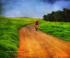 Bicyclist, Rainy Day on the Mana Road, Waimea, Hawaii 2018 (augenbrauns) Tags: sky thebigisland hawaii waimea manaroad bicycle bicyclist rainyday greenery green trees dirtroad netartii artdigital awardtree