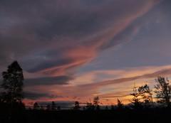 Subtle Sunset..x (Lisa@Lethen) Tags: subtle sunset lenticular windy weather nature silhouettes trees cloud pink