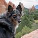 38/52 Weeks of Finn (Raquel Robison) Tags: 52weeksfordogs 52weekoffinn dogs gardenofthegods coloradodog