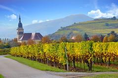 Ingersheim (Alsace, F) (pietro68bleu) Tags: alsace vignoble église pistecyclable clocher