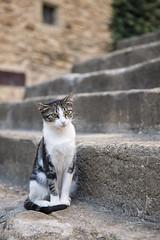 Un gato en Madremanya (Jorge Pazos) Tags: gat cat gato vertical color jorge pazos streetphotography streetshooting madremaya girona canon canonista 5dmarkiii 2470mm28l
