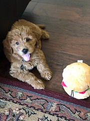 Harper and her hamburger