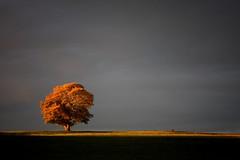 Herbststimmung in Bayern (qaxwkhlm1) Tags: awesome autumn herbst season himmel sky licht light evening bayern bavaria october golden canon stimmung baum tree mood minimalism