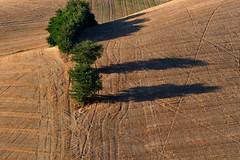 Rural texture (luporosso) Tags: natura nature naturaleza naturalmente nikon nikonitalia nikond500 marche italia italy alberi albero trees tree paglia straw scorcio scorci country countryside colline hills