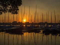 Sunset 2018 (Torsten schlüter) Tags: deutschland hamburg alster aussenalster segeln wasser sonnenuntergang sonne sonnenbaden sunset olympus 25mm 2018 himmel boote boot