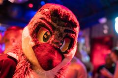 DSC07898 (Kory / Leo Nardo) Tags: frolic party frolicparty fur furry fursuit fursuiting sona fursona sanfrancisco california bar club theeaglebar eagle 2018 dance dj pupleo