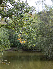 Strawberry Hill Pond (London Less Travelled) Tags: uk unitedkingdom england britain london suburb suburbs suburbia outskirts rural loughton epping essex highbeach forest strawberry hill pond water leaves trees