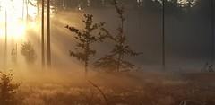 #Morgeninpression #Morgen #Sonne #Natur #Herbst #Farbenspiel (Mumes World) Tags: farbenspiel morgeninpression morgen natur sonne herbst sverige sweden schweden schwedenammorgen besterplatzzumleben wohnenwoandreurlaubmachen