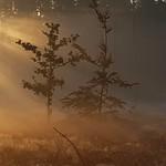 #Morgeninpression #Morgen #Sonne #Natur #Herbst #Farbenspiel thumbnail