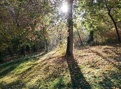 Sunny morning in the park of Hildburghausen (:Linda:) Tags: germany thuringia town hildburghausen park sun tree autumn shadow