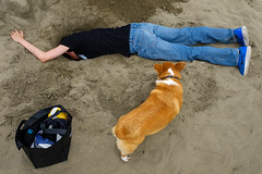 Untitled (kenwalton) Tags: america animal animals beach beaches california corgi corgicon digging dog dogs festival northamerica oceanbeach pet pets photography richmond richmonddistrict sanfrancisco sand street streetphoto streetphotography therichmond usa unitedstates unitedstatesofamerica urban streetphotographer