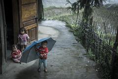 _DSC1205 (BisonAlex) Tags: 越南 vietnam sapa 沙壩 健行 trekking mountain rain could kid peoplelife dog market wood