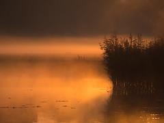 Morgennebel am Neuen Teich (lebastian) Tags: panasonic dmcgx8 lumix g vario 45150f4056 sonnenaufgang sunrise