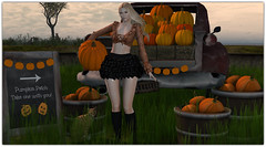 .Pumpkin Patch (Abi Latzo) Tags: secondlife secretposes senseevent accessevent laperla heels gulabi events bento beauty blonde people pose photography portrait poses prop sl shopping avatar fashion mesh model meshhead meshbody pumpkin halloween holiday