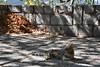 DSC_9563 (Kent MacElwee) Tags: greece delphi europe mountparnassus cat feline straycat delphoi