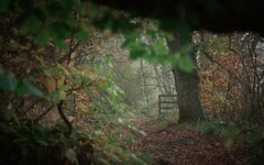 The Way Through (ShinyPhotoScotland) Tags: art photography equipment camera lens places scotland perthshire rawconversion manipulated composite hdr enfuse digikam rawtherapee darktable blur depthoffield narrowdof bokeh auchterarder fuji oaktreewalk fujixh1 fuji1655f28