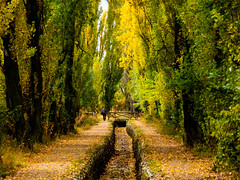¡Cuánto bien hace un paseo! (Jesus_l) Tags: europa españa valladolid lagunadeduero acequia arboles otoño jesýsl