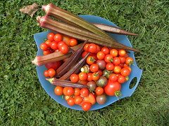 September Harvest (MadKnits) Tags: garden growing plants green harvest september okra vegetable tomatoes