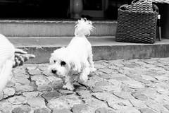 Dogs of Freiburg (*** Joe Wild ***) Tags: street city urban photography streetphotography architecture travel art streetart streetstyle photo instagood life photooftheday love follow blackandwhite beautiful road fashion like bnw style picoftheday graffiti ig cars streetview speed bhfyp