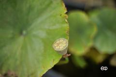 Minolta AF 50mm 1.4 (Ney Bokeh) Tags: minoltaaf dof coloursofautumn green bokeh