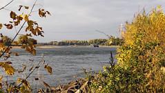 Herbst am Rhein / Monheim (KL57Foto) Tags: 2018 fluss germany gewässer herbst jahreszeitenundwetter kl57foto landschaften monheimmonheim am rhein nrw natur nordrheinwestfalen omdem1 oktober olympus rhine river strom autumn