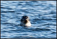 2018_июль_Поной_3_011 (Snowman_pro) Tags: flight kolapeninsula nord sea summer water вода кольскийполуостров лето море полёт сосновка белоеморе whitesea