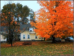 Autumn Scene In Chelmsford, MA - Photo Taken by STEVEN CHATEAUNEUF On October 28, 2018 With Mild Editing Done (snc145) Tags: autumn fall seasons sky trees grass leaves foliage bushes houses architecture cars outdoor photo editedimage colors texture bright bold vivid chelmsford massachusetts usa october282018 stevenchateauneuf vividstriking flickrunitedaward