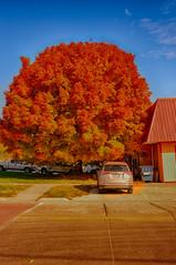 Blazing Autumn Delight (kendoman26) Tags: hdr nikhdrefexpro2 niksoftware nikon nikond7100 tokinaatx1228prodx tokina tokina1228 autumn autumncolors fall fallcolors morrisillinois