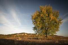 Missouri River Bluffs (Notley Hawkins) Tags: httpwwwnotleyhawkinscom notleyhawkinsphotography notley notleyhawkins 10thavenue fall autumn foliage trees bluff bluffs cliff cliffs riverbottoms bottomland field farmfield soybeanfield soy soybean farm wiltonmissouri afteroon lateafternoon sky clouds horizon tiltshift 2018 october missouririverbottoms landscape outdoors canontse24mmf35lii