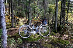 Forest light (Shu-Sin) Tags: green mountains bicycle velo shusin 650b randonneur randonneuse fender touring trees moss