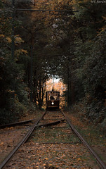Autumn ride (WT_fan06) Tags: hull 96 tramway historic history manchester uk old retro vintage heritage heaton park museum nature autumn octover photography nikon d3400 dslr aesthetic composition beautiful focus artistic artsy flickr 7dwf orange colorful saturated contrast light green tracks lines decay scary spooky evening sunset dusk dark sun trees portrait