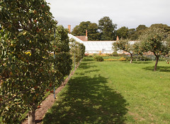 2018_09_0801 (petermit2) Tags: appletree apple apples orchard tree walledgarden clumberpark clumber nottinghamshire nationaltrust nt