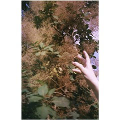 Soft touch (laserdazed) Tags: analogue 35mm expiredfilm filmisnotdead istillshootfilm